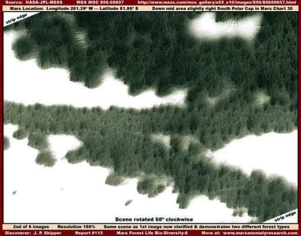 Foreste sul pianeta rosso