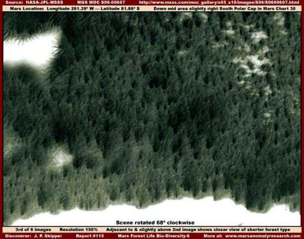 """Folto gruppo di """"alberi"""" sulla superficie marziana"""