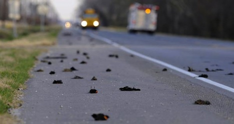Uccelli morti su una strada americana