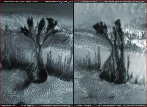 Alberi o forme vegetaloidi su Marte