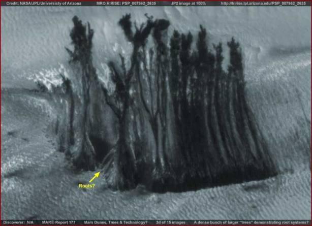 Gruppo di alberi marziani