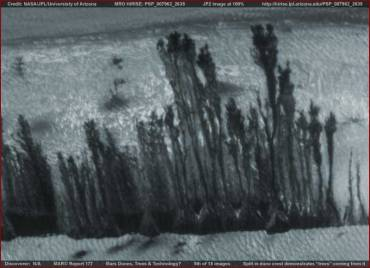 Vegetazione su Marte