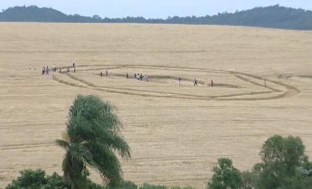 Cerchi nel grano comparsi in Brasile